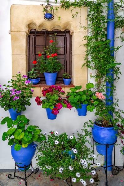 Courtyard Patios, Festival Flora, Fiesta de los Patios, Cordoba Patios Festival