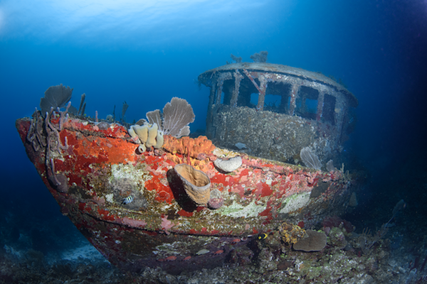 Underwater Mystery Coral-covered Shipwreck Prints