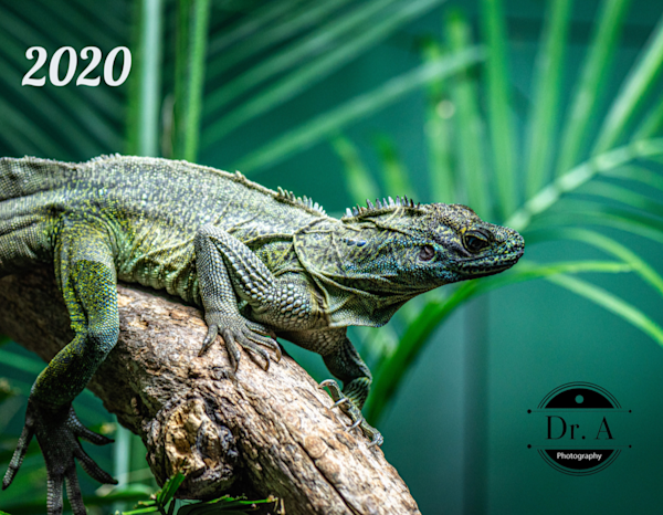 Wildlife 2020