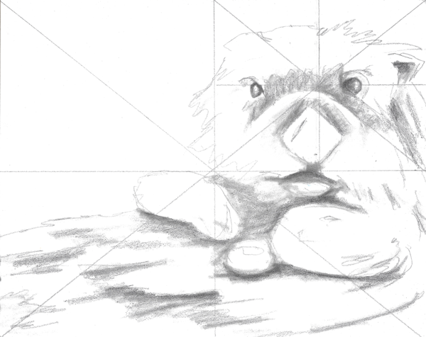 Paint this pre-drawn otter
