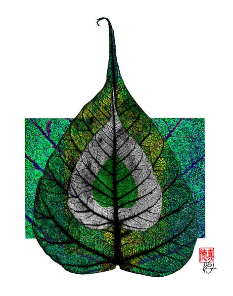 Zen in Color Gallery