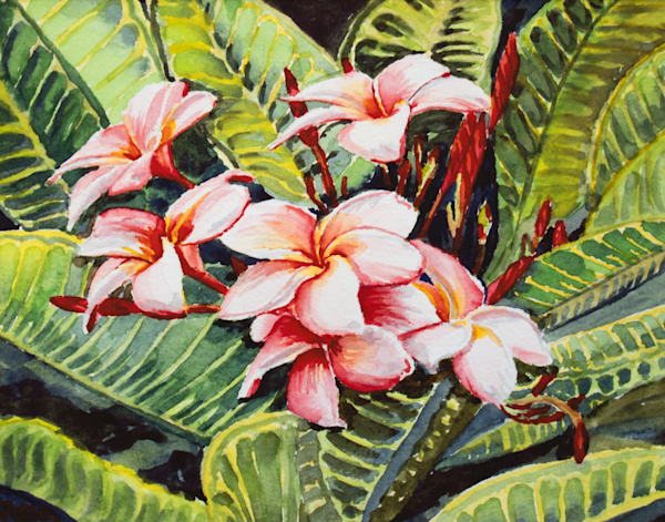 Rainbow Plumeria Art for Sale