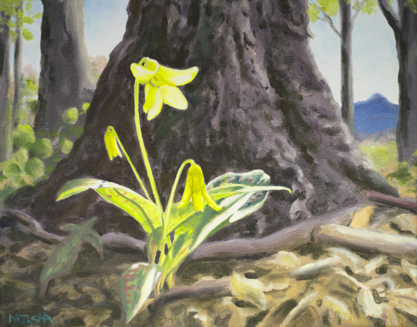 Trout Lily Wild Flower Art for Sale
