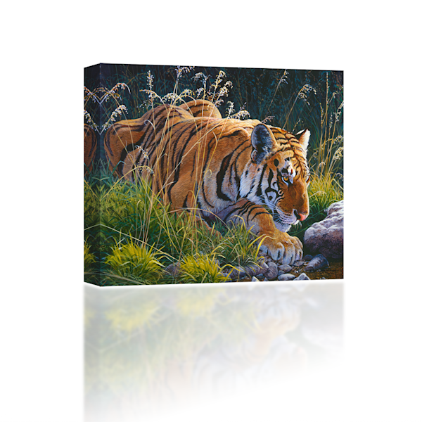 Tiger-in-the-Brush
