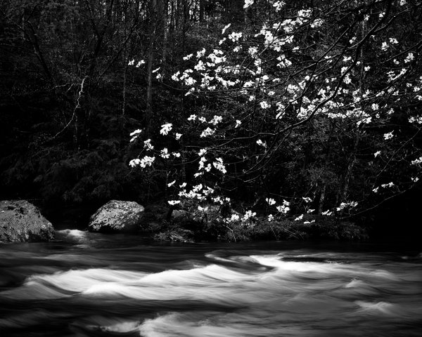 Fine Art Print | Flowering Dogwood Flowing Water