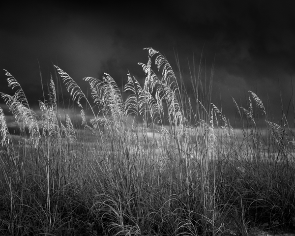 Fine Art Print | Sea Oats Coming Storm