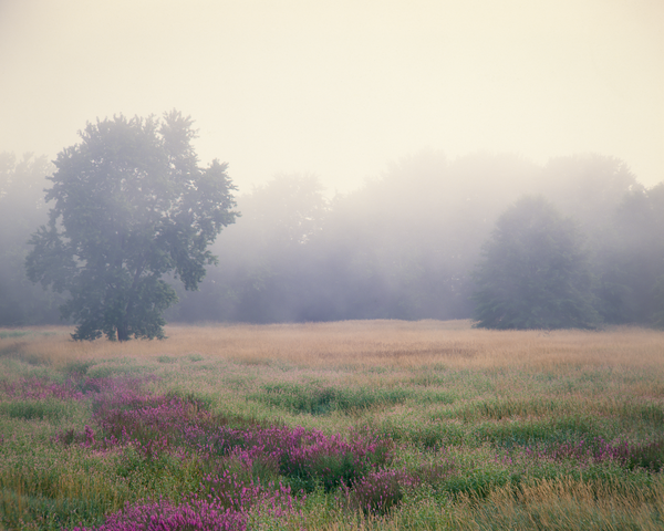 Fine Art Print | Misty Morning Veil Shrouds Troy Meadows