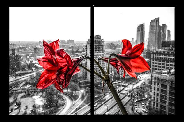 Art: Concrete Lilies'