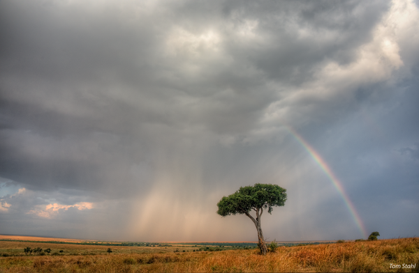Clearing Storm, Masai Mara, 2016. Photography Art | Tom Stahl Photography