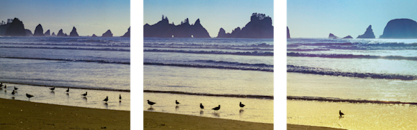 Fine Art Multi-Panel Print of stunning landscape of Sand Pipers and Sea Stacks set against a golden sun set.