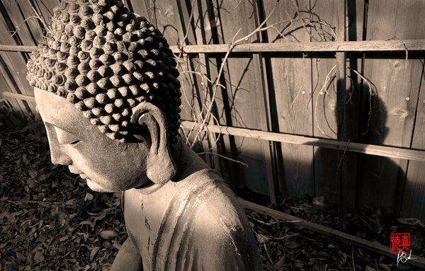 Even the Buddha Has a Shadow