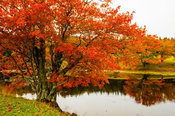 Long Pond Autumn Photography Art | Craig Primas Photography
