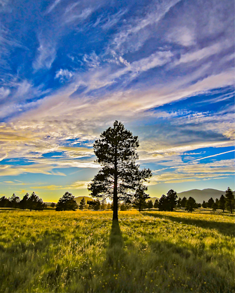 Lone Tree Art | In Motion Pictures