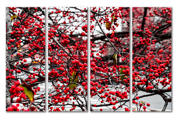 Red Berry Invasion - HD Metal Art - 36x48(4 Pieces)
