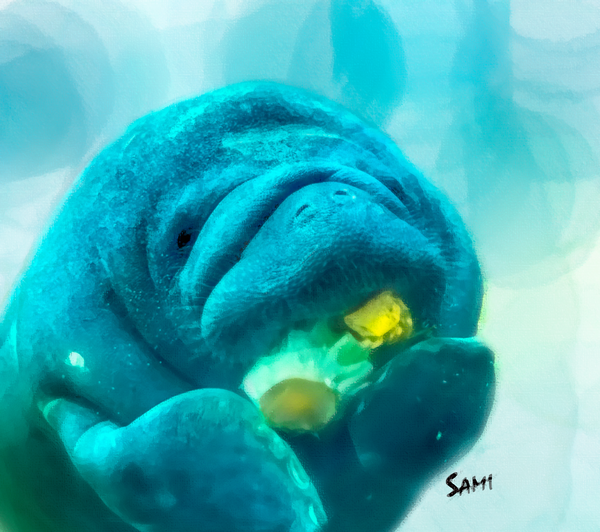 Baby Manatee Wildlife Painting for Sale | Sami's Art Shop