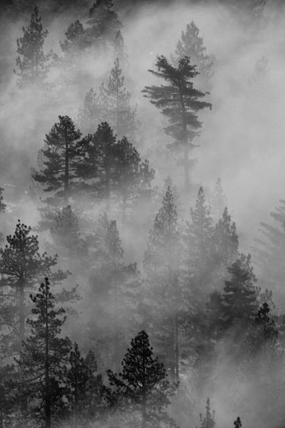 Vertical Forest Inversion I Lake Tahoe Landscape Photography I David N. Braun