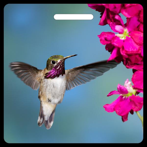 Calliope Hummingbird- Bag Tag