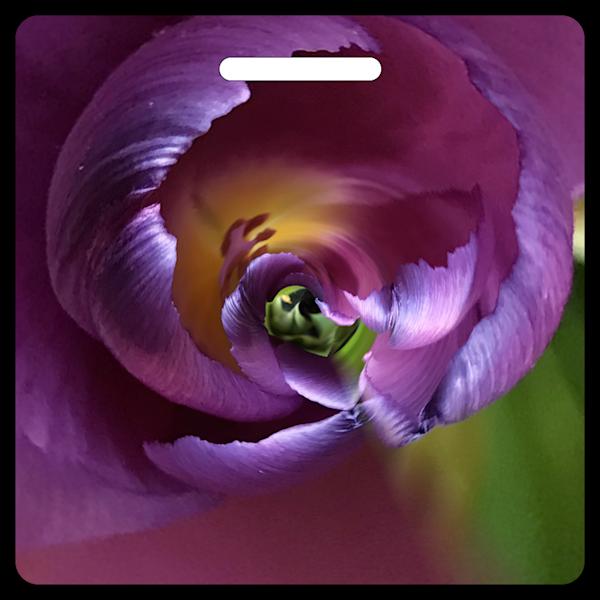 Twisted Tulip- Bag Tag