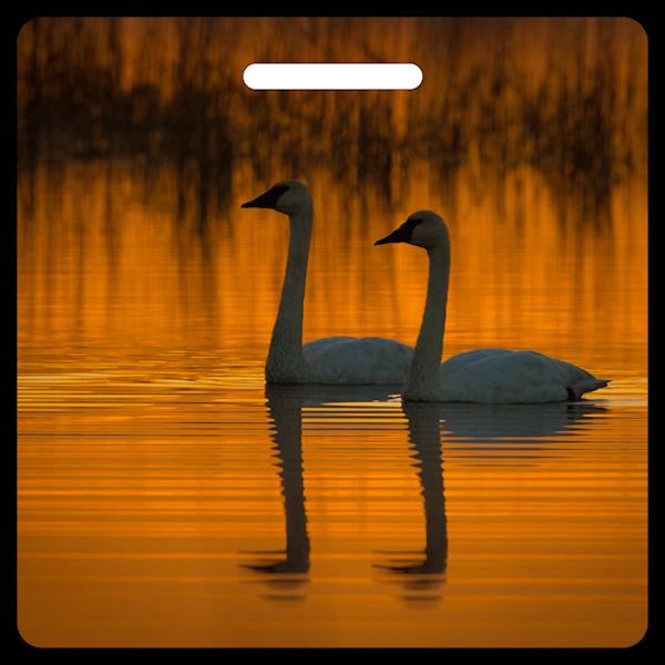 Swans At Dawn- Bag Tag