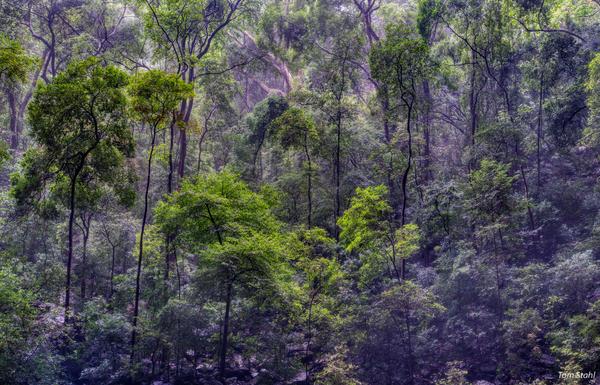 Rainforest, Ankarana National Park