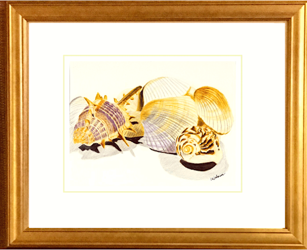 Shells, Original Colored Pencil Painting