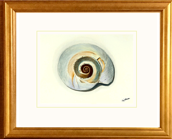 Nautilus, Original Colored Pencil Painting