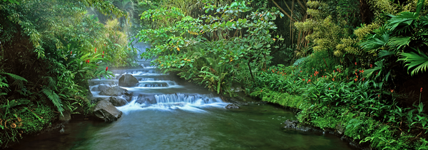 Art Print Tabacon Hot Springs Arenal Rainforest Costa Rica