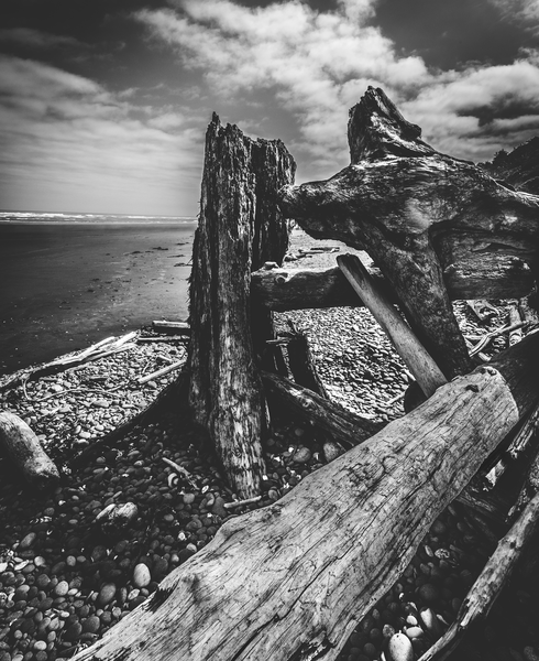 Beach Log Bridge Photography Art | Gretchen Shepherd Photography / Images by Gretchen