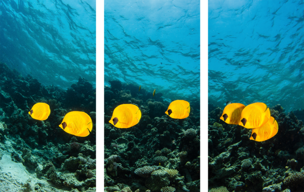 Yellow butterfly fish form a small school in this fine art photograph created as panel art for sale.