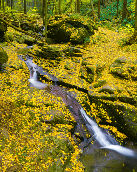 Fine Art Print | Autumn Colored Leaves Paint Small Creek
