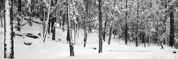 Fine Art Print | Fresh Virgin Snow Forest Scene