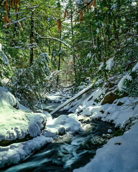 Fine Art Print | Valhalla Creek Fresh Snowfall
