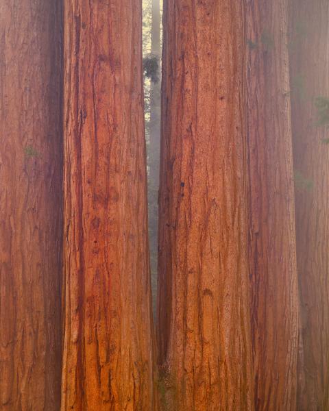 Giants In The Mist Art | Robert Vielee Photography