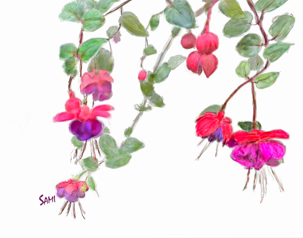 Fuchsia Flower Painting for Sale | Sami's Art Shop