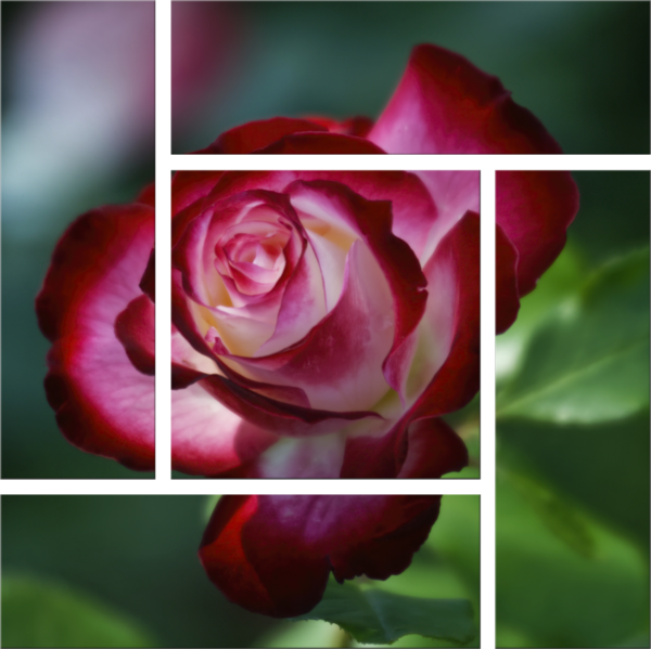 Glowing Rose Parquet Grouping Photography Art   FocusPro Services, Inc.
