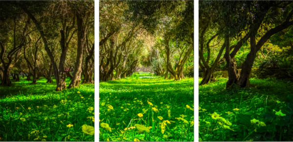 Green Forest Photography Art   FocusPro Services, Inc.