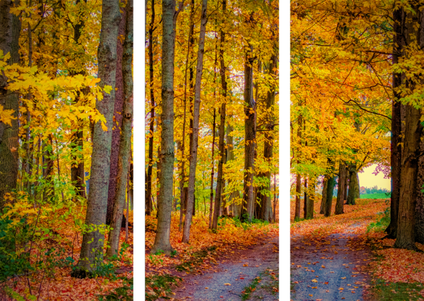 Fall Colors Driveway Photography Art by focuspro