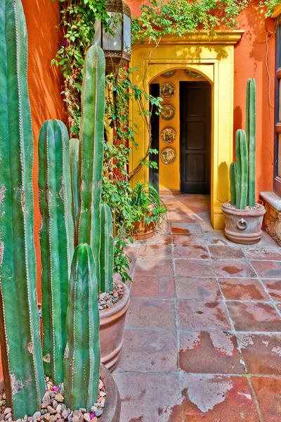 Art Print San Miguel De Allende Mexico Cactus and Courtyard