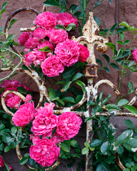 Rose And Rust 1 Photography Art | Happy Hogtor Photography