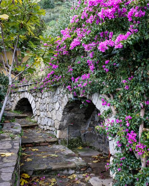 Pathway Of Purple Photography Art | Happy Hogtor Photography