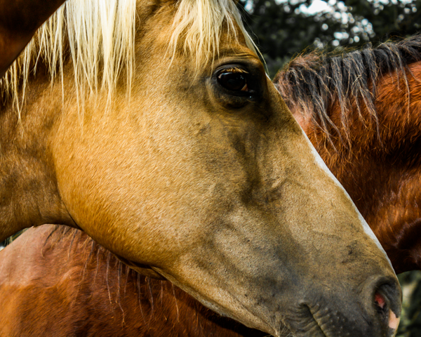 Horse Hair Photography Art | Happy Hogtor Photography