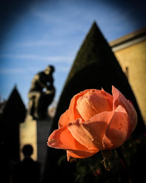 Le Penseur (The Thinker) & La Rose Photography Art | Happy Hogtor Photography