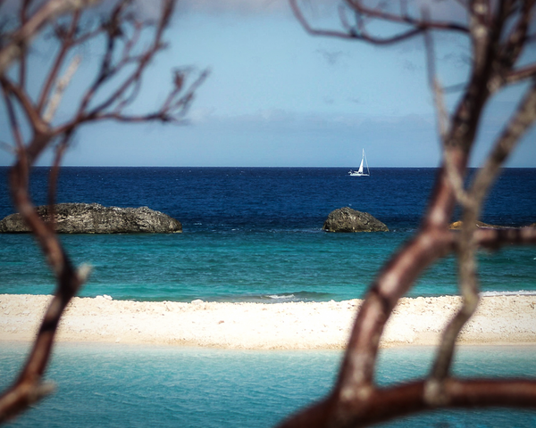 Boat Through The Trees Photography Art | Happy Hogtor Photography