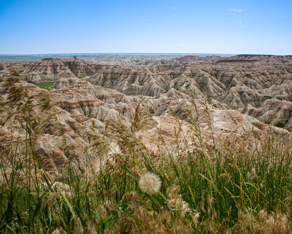 Grass In The Badlands Photography Art | Happy Hogtor Photography