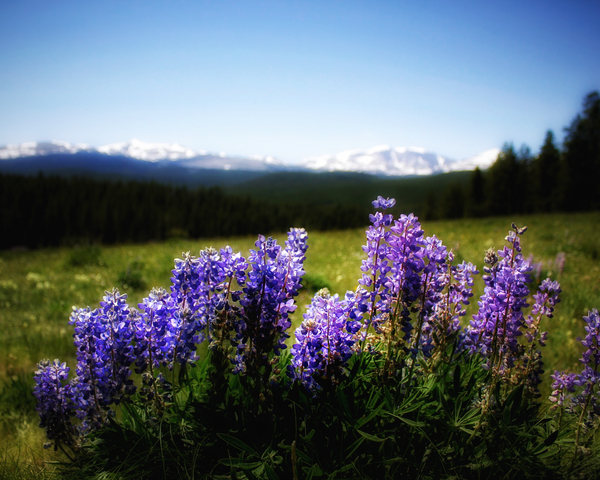 First View Of The Rockies Photography Art | Happy Hogtor Photography