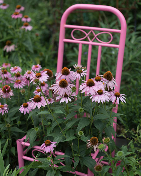 Pink Coneflowers And Chair Photography Art | Happy Hogtor Photography