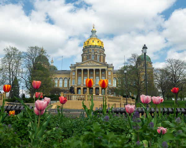 Tulips At The Iowa Capitol Photography Art | Happy Hogtor Photography