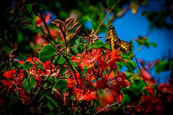 Flying Colors Photography Art | Happy Hogtor Photography