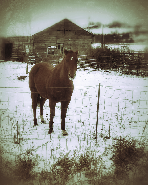 Sunny The Horse Photography Art | Happy Hogtor Photography