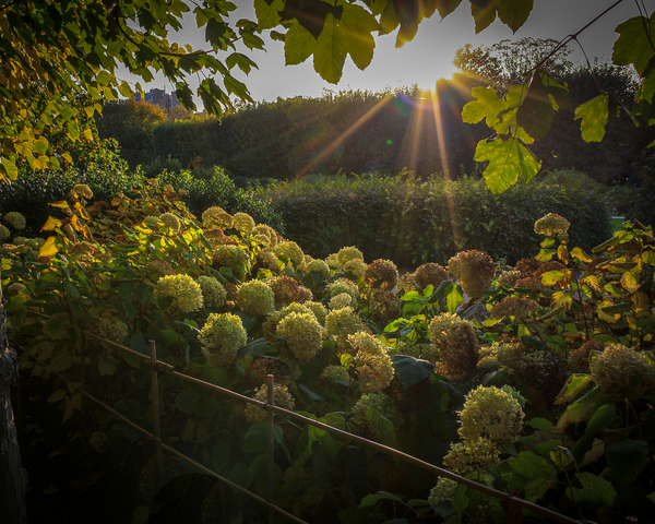 Sun Through The Garden Photography Art | Happy Hogtor Photography
